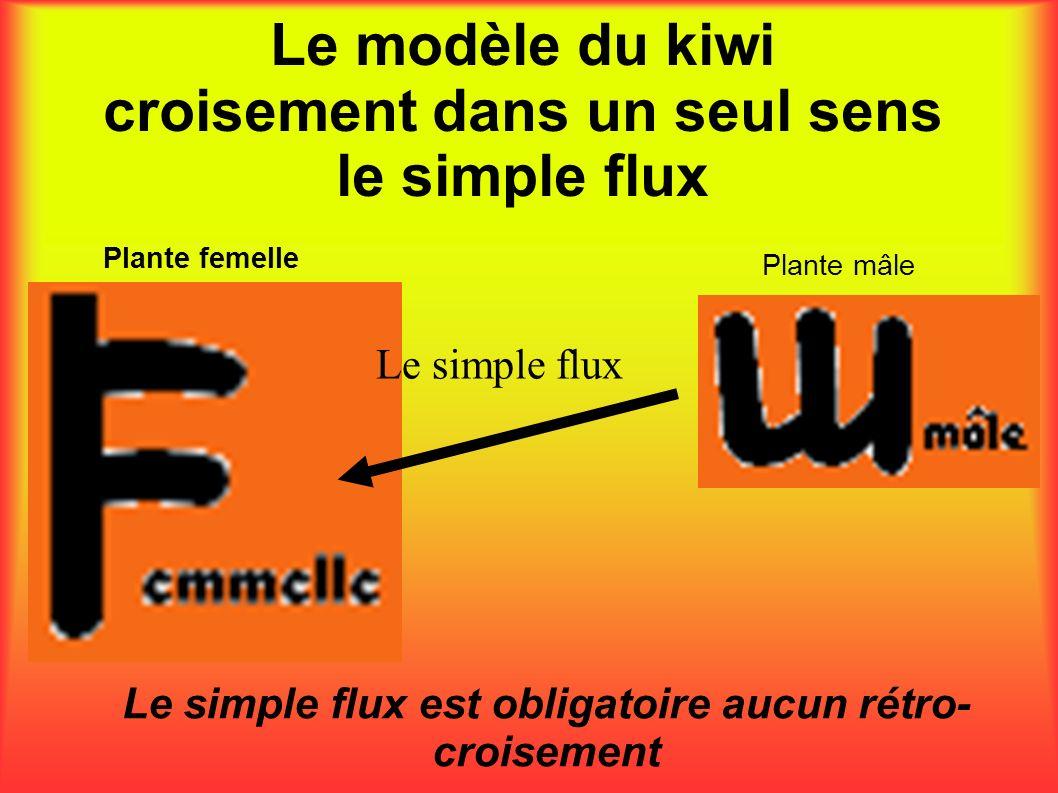 Le modèle du kiwi croisement dans un seul sens le simple flux Le simple flux est obligatoire aucun rétro- croisement Plante femelle Plante mâle Le sim