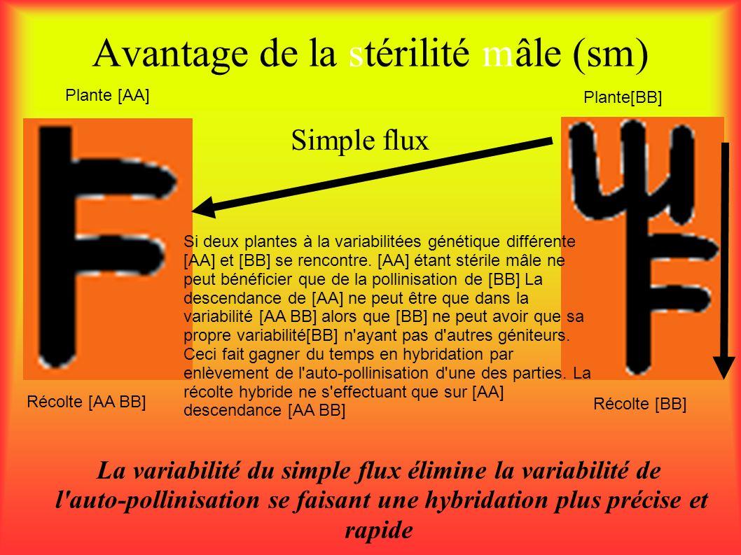 Avantage de la stérilité mâle (sm) La variabilité du simple flux élimine la variabilité de l'auto-pollinisation se faisant une hybridation plus précis