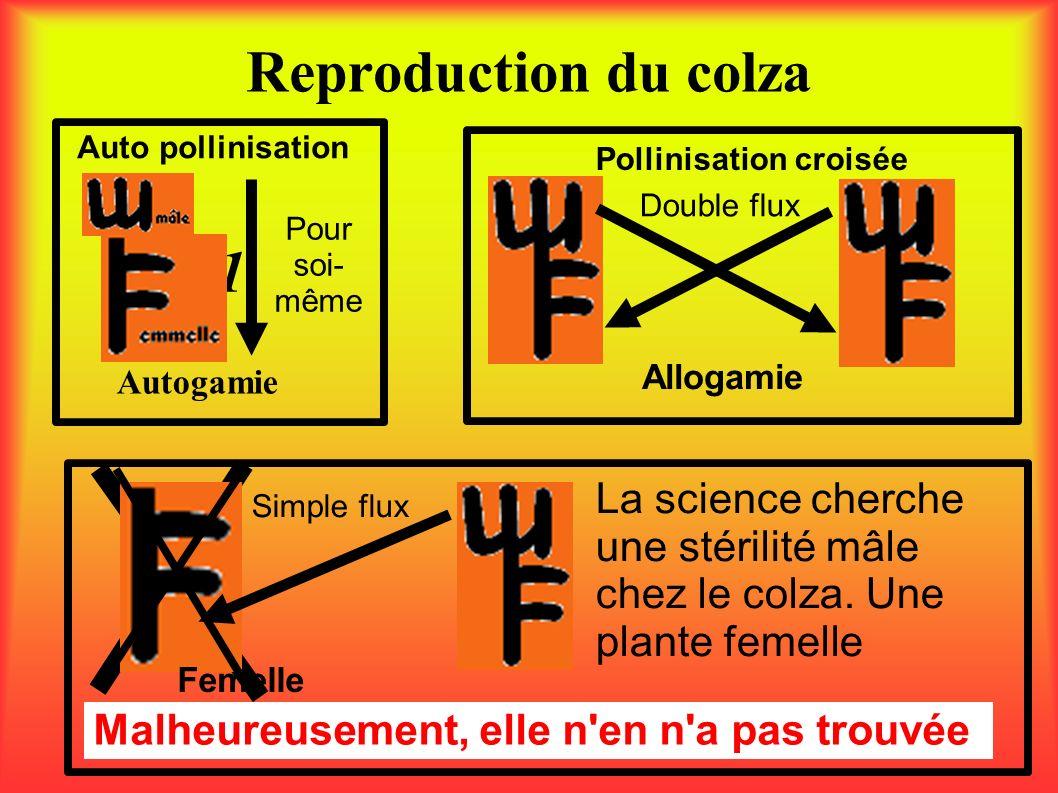Reproduction du colza 1 Autogamie Auto pollinisation Pollinisation croisée Double flux Pour soi- même Malheureusement, elle n'en n'a pas trouvée Allog