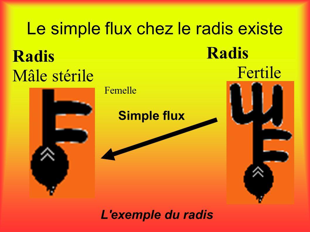 Le simple flux chez le radis existe L'exemple du radis Radis Mâle stérile Simple flux Femelle Radis Fertile