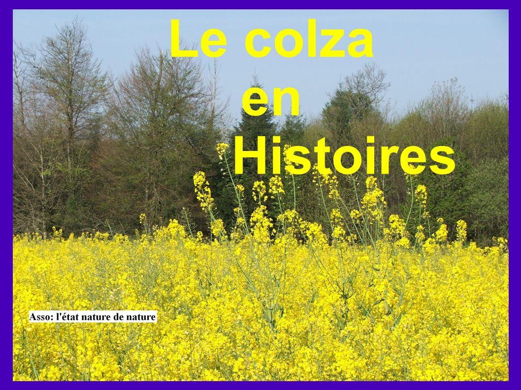 Le colza en Histoires