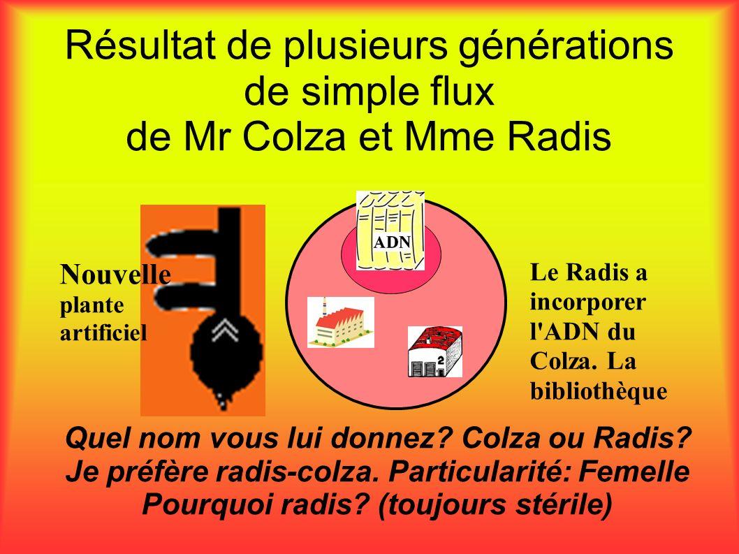 Résultat de plusieurs générations de simple flux de Mr Colza et Mme Radis Quel nom vous lui donnez? Colza ou Radis? Je préfère radis-colza. Particular