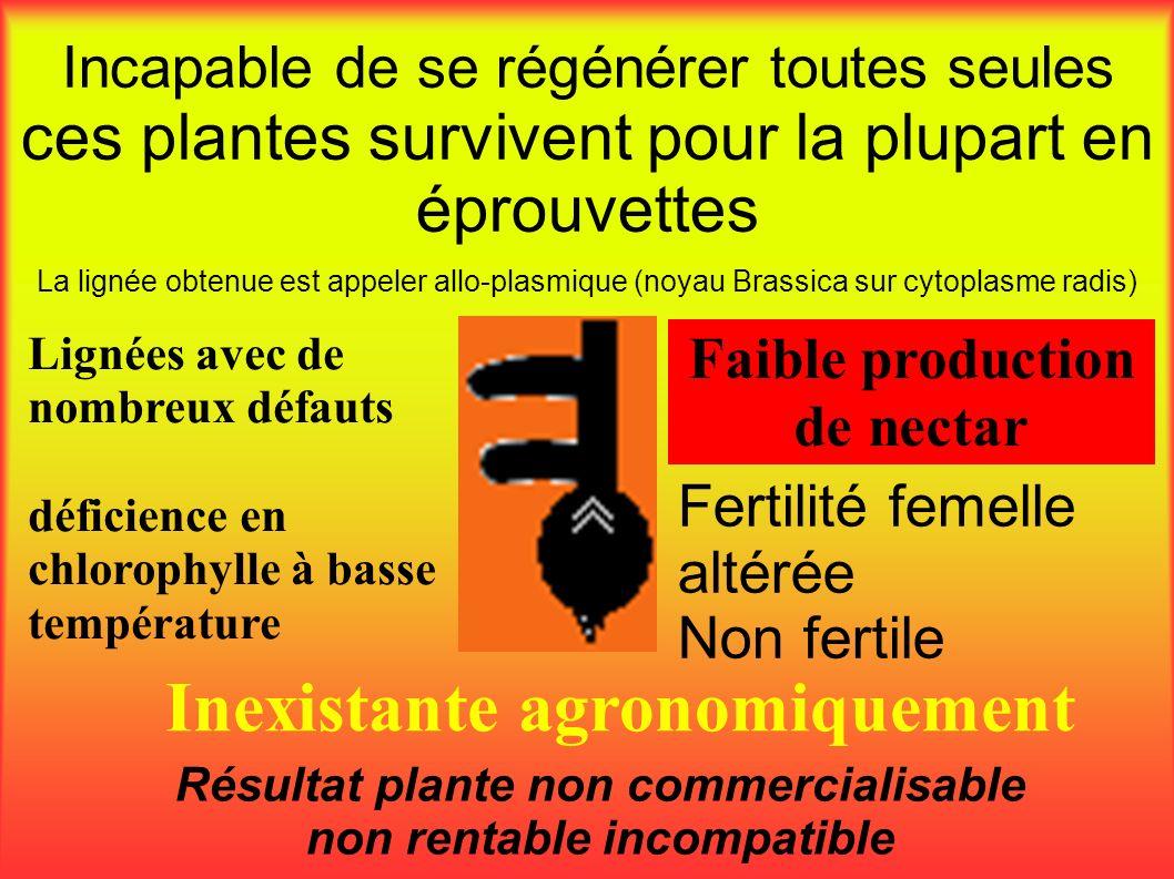 Faible production de nectar Incapable de se régénérer toutes seules ces plantes survivent pour la plupart en éprouvettes Résultat plante non commercia