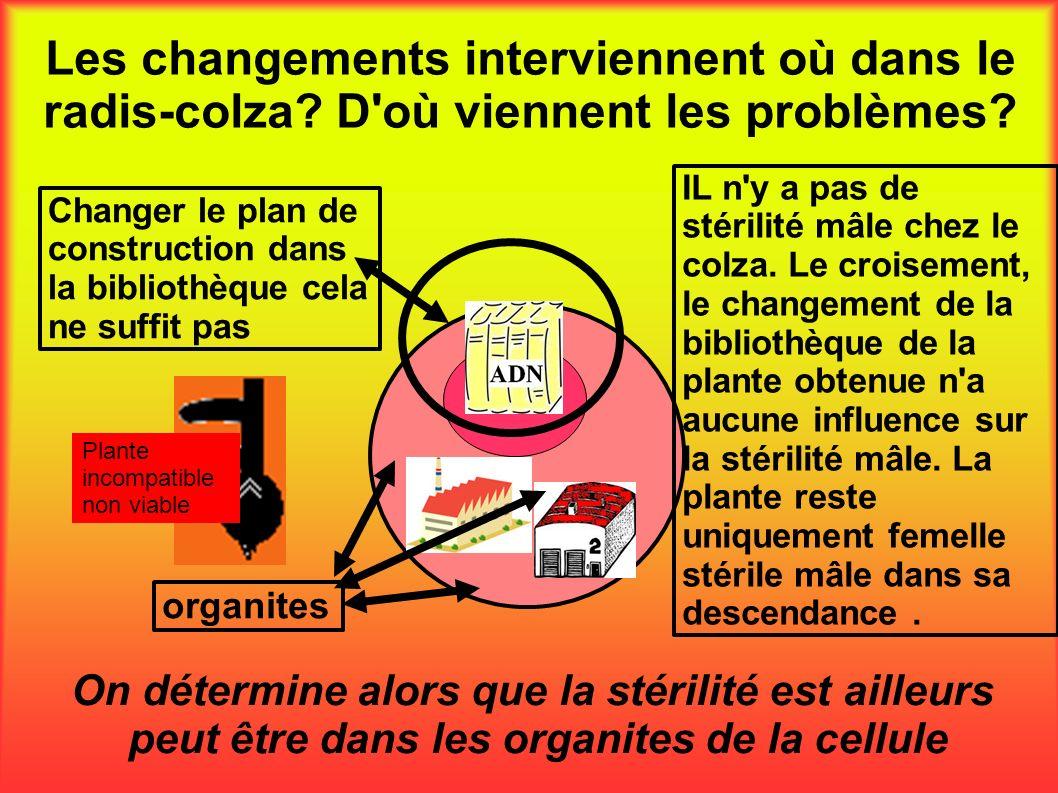 Les changements interviennent où dans le radis-colza? D'où viennent les problèmes? On détermine alors que la stérilité est ailleurs peut être dans les