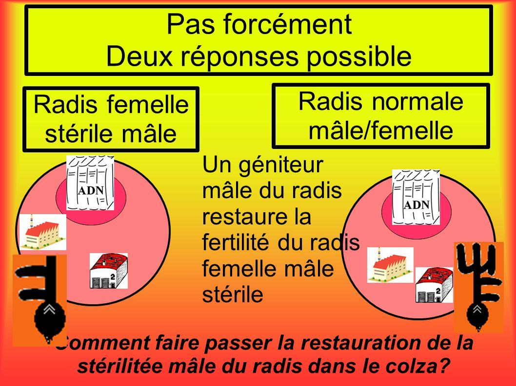 Pas forcément Deux réponses possible Comment faire passer la restauration de la stérilitée mâle du radis dans le colza? Radis femelle stérile mâle Rad