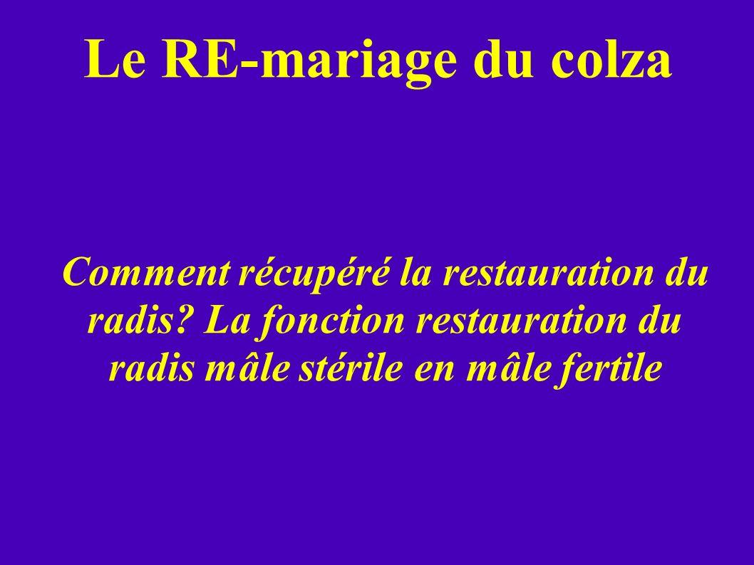 Comment récupéré la restauration du radis? La fonction restauration du radis mâle stérile en mâle fertile