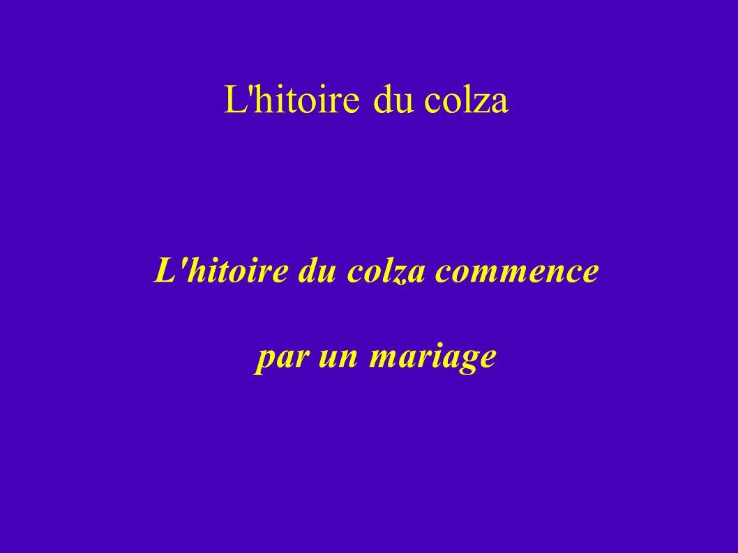 L'hitoire du colza L'hitoire du colza commence par un mariage