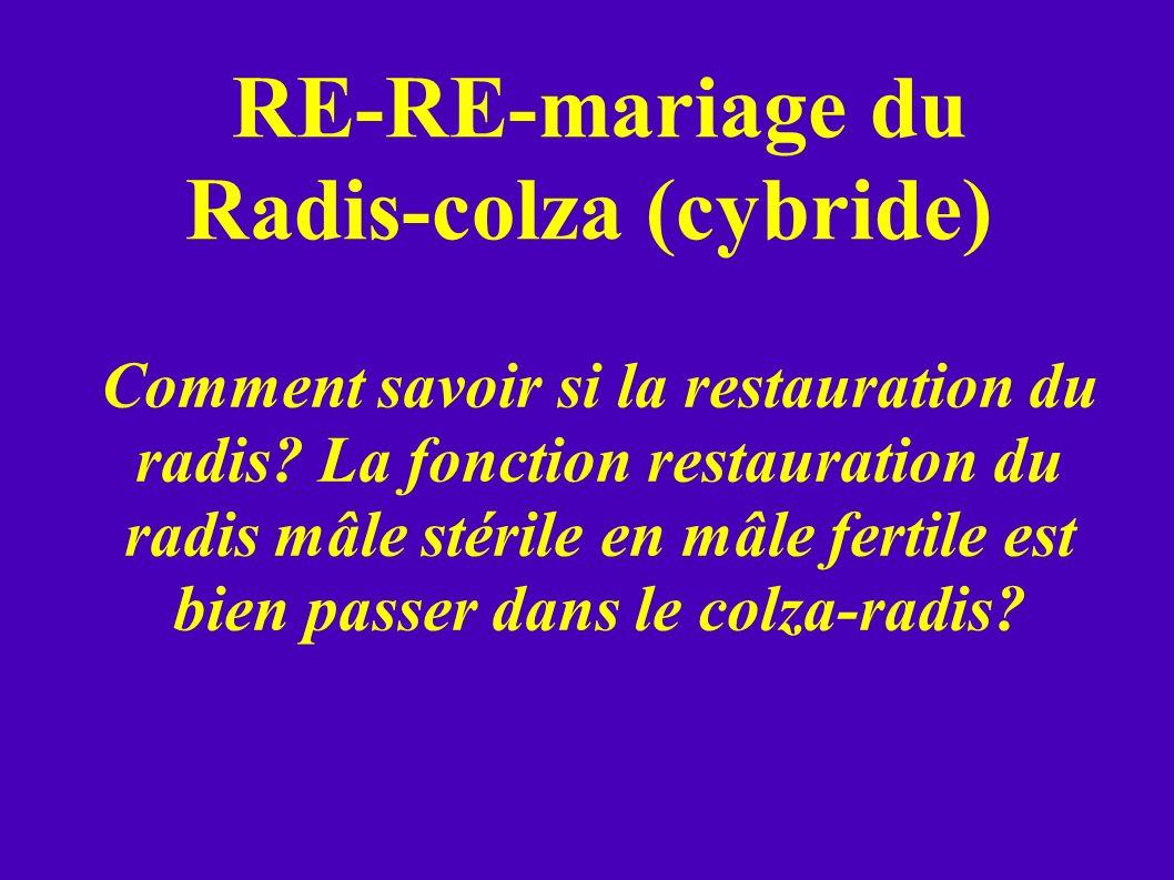 RE-RE-mariage du Radis-colza (cybride) Comment savoir si la restauration du radis? La fonction restauration du radis mâle stérile en mâle fertile est