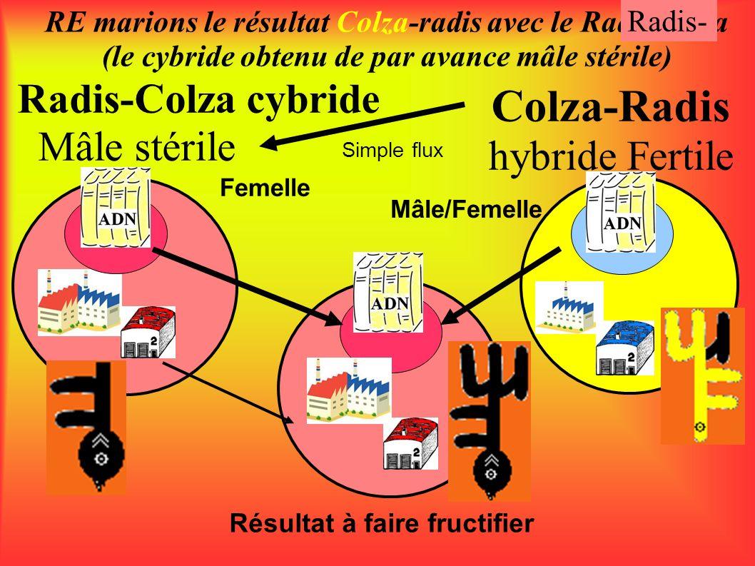 Radis-Colza cybride Mâle stérile RE marions le résultat Colza-radis avec le Radis-colza (le cybride obtenu de par avance mâle stérile) Colza-Radis hyb