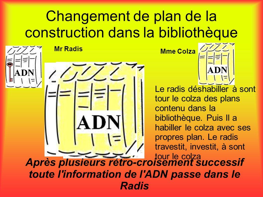 Changement de plan de la construction dans la bibliothèque Après plusieurs rétro-croisement successif toute l'information de l'ADN passe dans le Radis