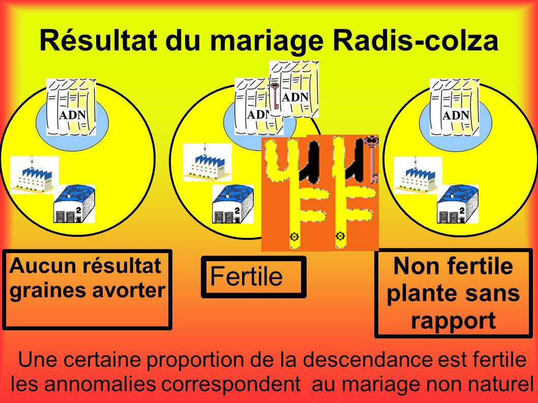 Résultat du mariage Radis-colza Aucun résultat graines avorter Non fertile plante sans rapport Fertile Une certaine proportion de la descendance est f
