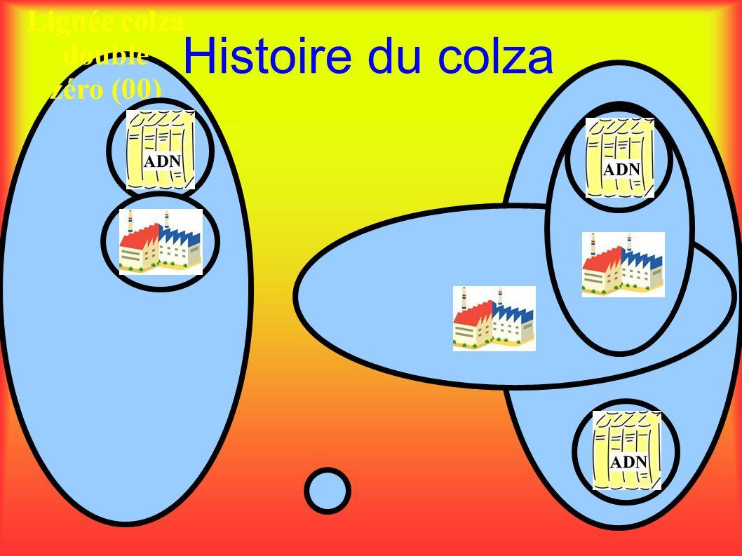 Histoire du colza Lignée colza double zéro (00)