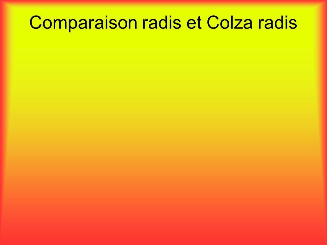 Comparaison radis et Colza radis