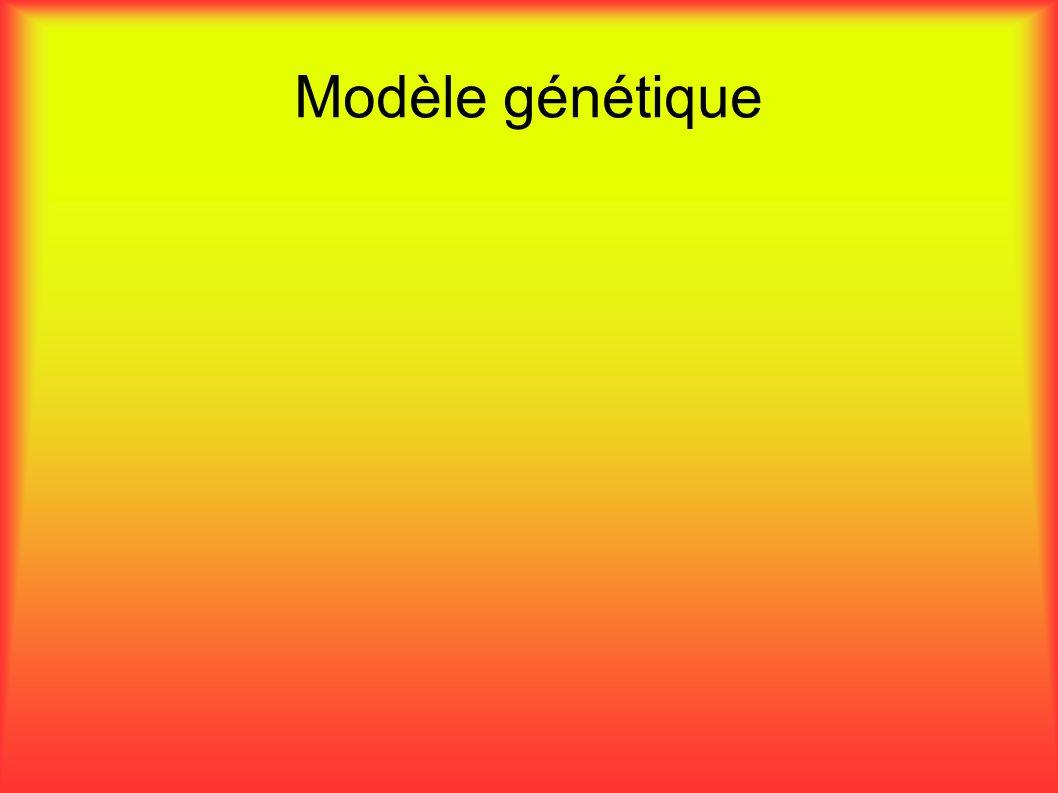 Modèle génétique