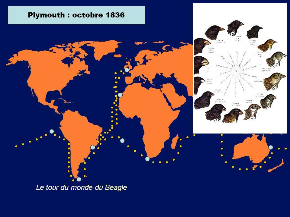 Plymouth : décembre 1831Iles CanariesRio de Janeiro : avril 1832Terre de Feu : décembre 1834Iles Galapagos : septembre 1835Sydney : janvier 1836Le Cap