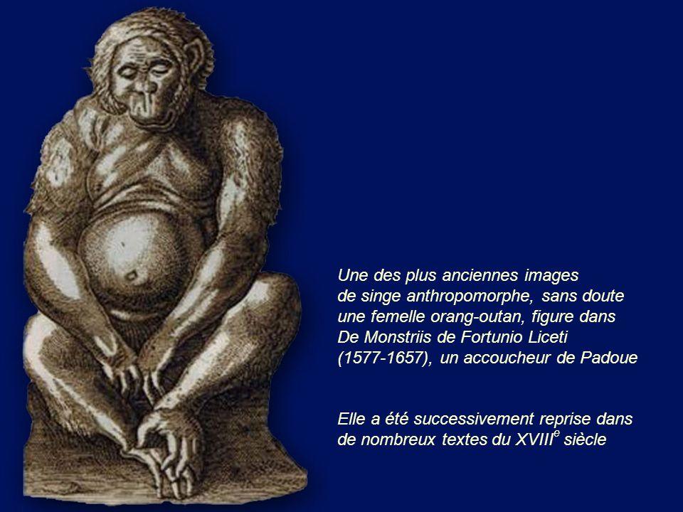 Une des plus anciennes images de singe anthropomorphe, sans doute une femelle orang-outan, figure dans De Monstriis de Fortunio Liceti (1577-1657), un