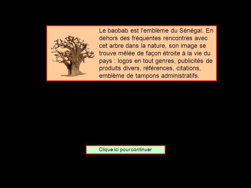 De quel pays le baobab est-il lemblème ? Le Sénégal Le Mali Le Soudan