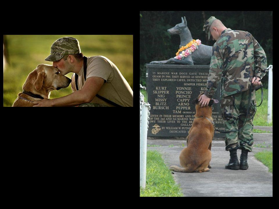 La loyauté d un chien n est comparable à rien d autre.