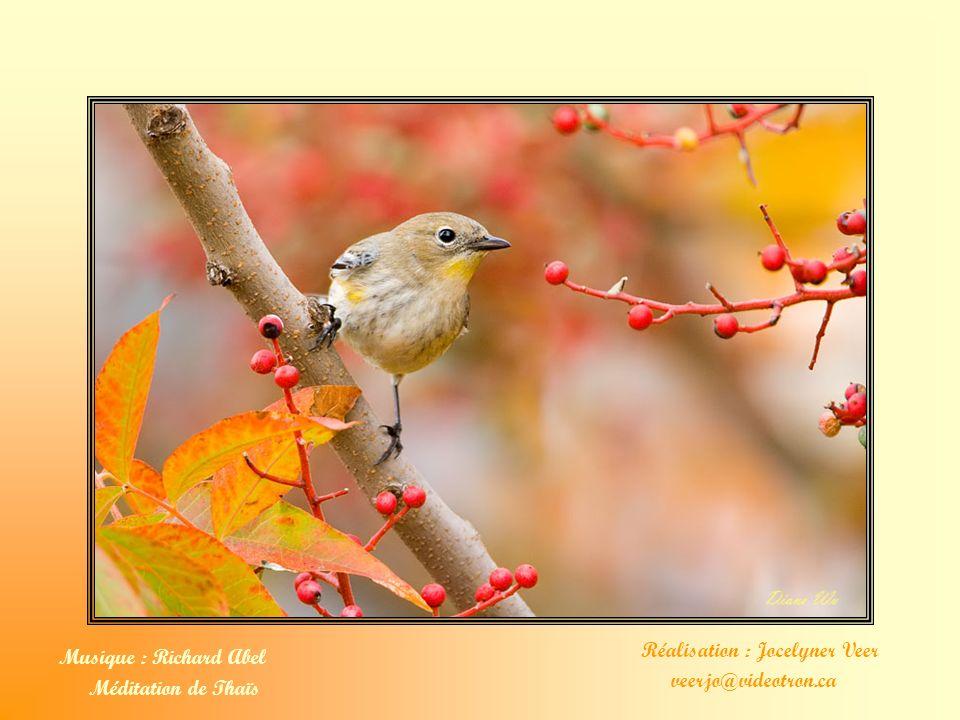 Que Dieu nous bénisse. Amen. Texte : Mère Teresa Photos : Diane Wu www.PBaseroseslover