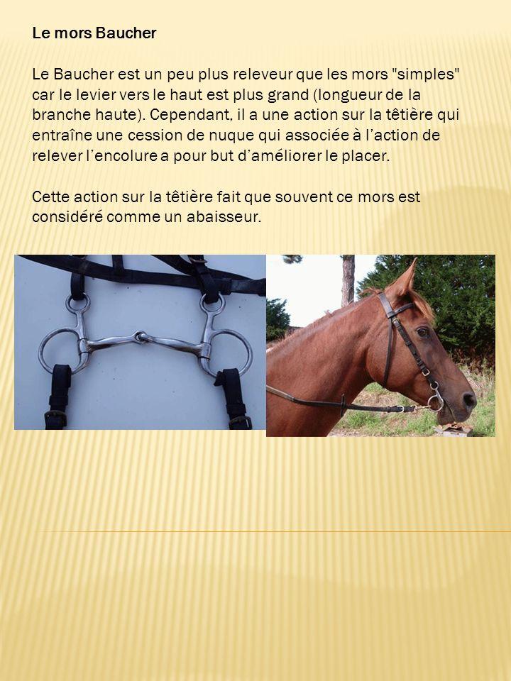 Résine : Il procure un contact très agréable pour le cheval qui vient plutôt franchement sur son mors.