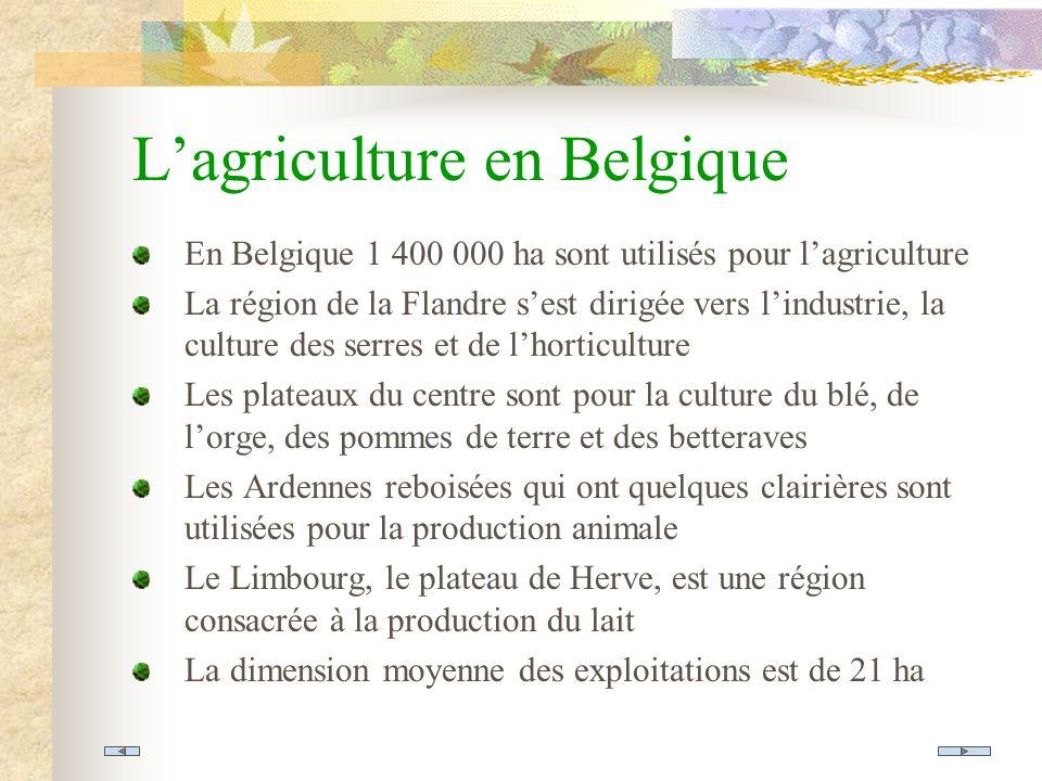Lagriculture en Belgique En Belgique 1 400 000 ha sont utilisés pour lagriculture La région de la Flandre sest dirigée vers lindustrie, la culture des serres et de lhorticulture Les plateaux du centre sont pour la culture du blé, de lorge, des pommes de terre et des betteraves Les Ardennes reboisées qui ont quelques clairières sont utilisées pour la production animale Le Limbourg, le plateau de Herve, est une région consacrée à la production du lait La dimension moyenne des exploitations est de 21 ha