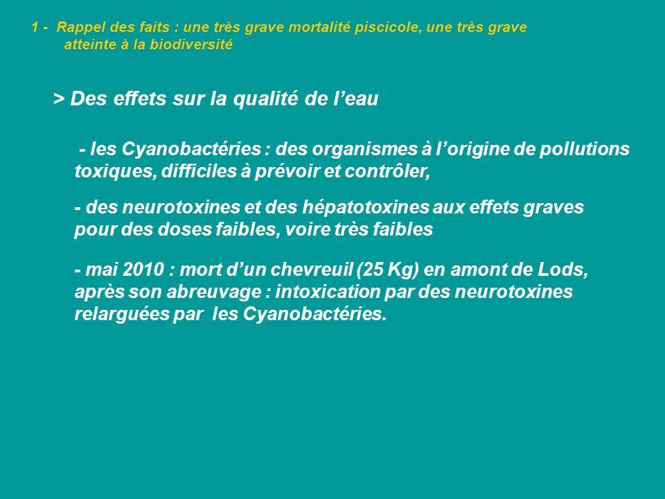 1 - Rappel des faits : une très grave mortalité piscicole, une très grave atteinte à la biodiversité > Des effets sur la qualité de leau - les Cyanoba