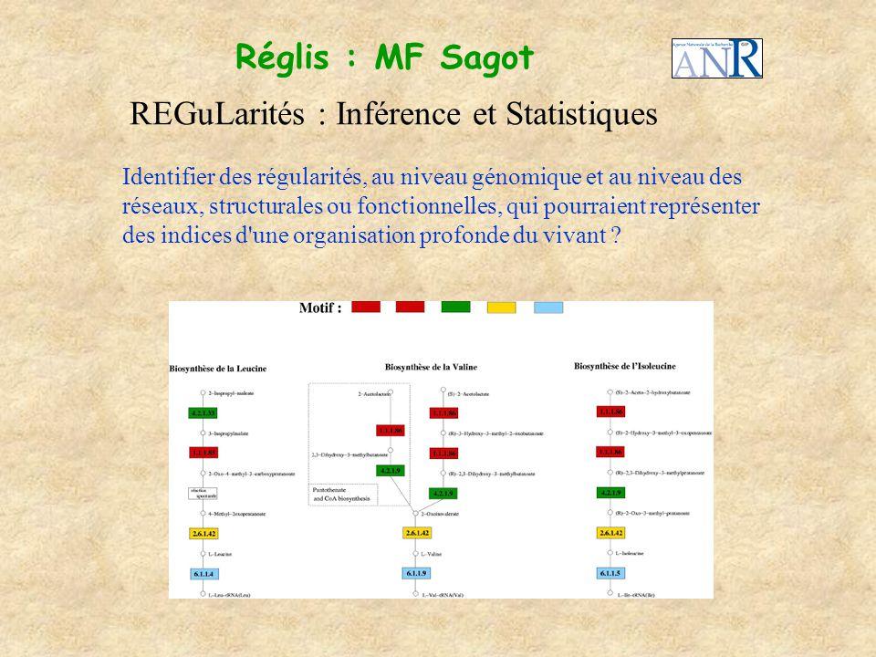 Réglis : MF Sagot REGuLarités : Inférence et Statistiques Identifier des régularités, au niveau génomique et au niveau des réseaux, structurales ou fo