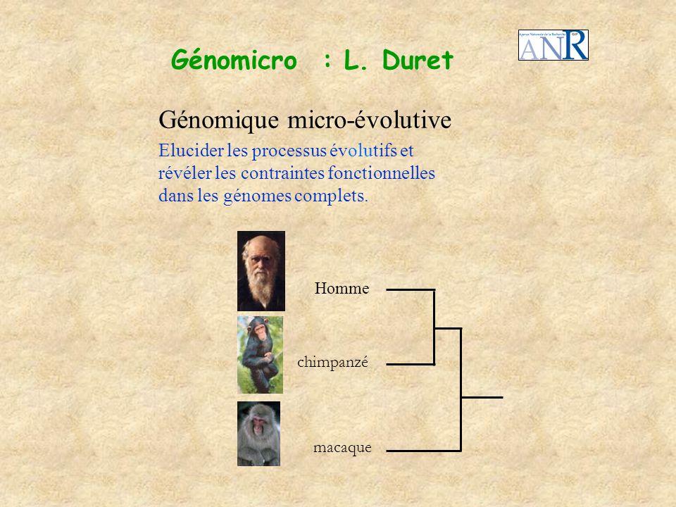 Génomicro : L. Duret Elucider les processus évolutifs et révéler les contraintes fonctionnelles dans les génomes complets. Génomique micro-évolutive c