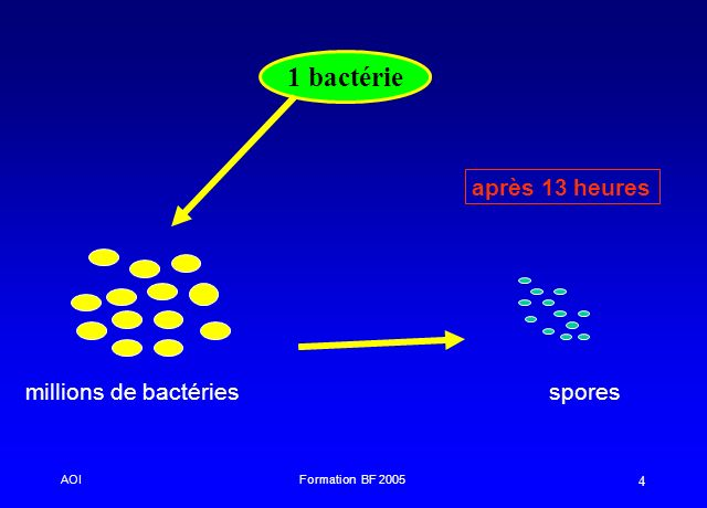 AOIFormation BF 2005 4 1 bactérie millions de bactériesspores après 13 heures