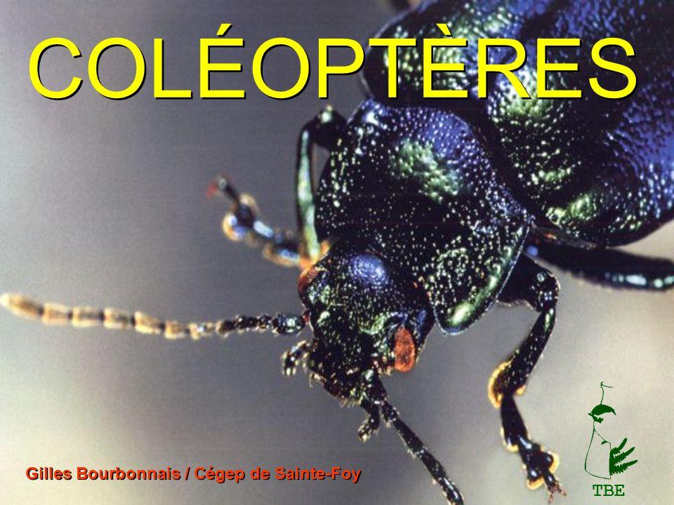 COLÉOPTÈRES Gilles Bourbonnais / Cégep de Sainte-Foy TBE