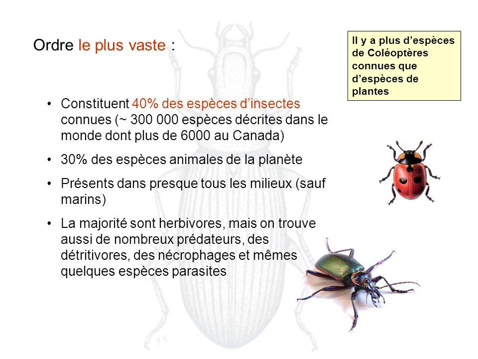 Ordre le plus vaste : Constituent 40% des espèces dinsectes connues (~ 300 000 espèces décrites dans le monde dont plus de 6000 au Canada) 30% des espèces animales de la planète Présents dans presque tous les milieux (sauf marins) La majorité sont herbivores, mais on trouve aussi de nombreux prédateurs, des détritivores, des nécrophages et mêmes quelques espèces parasites Il y a plus despèces de Coléoptères connues que despèces de plantes