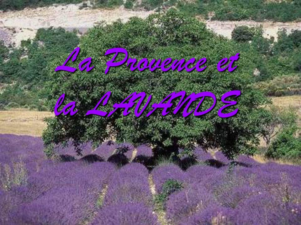 La Provence et la LAVANDE