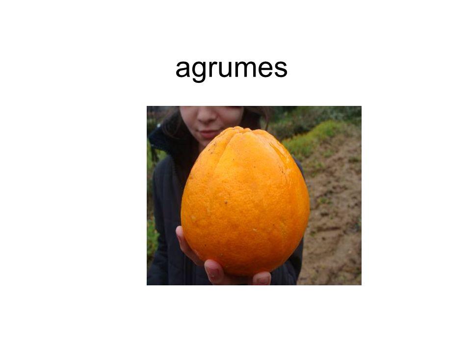 L ESSENTIEL Avec la pomme et la banane, les oranges font partie des fruits les plus consommés en France.
