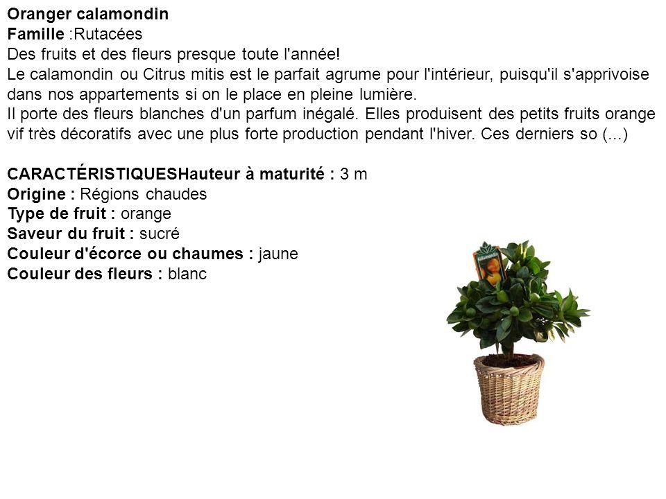 Oranger d appartement Citrus mitis Famille :Rutacées Superbe arbuste qui fleurit et fructifie toute l année.