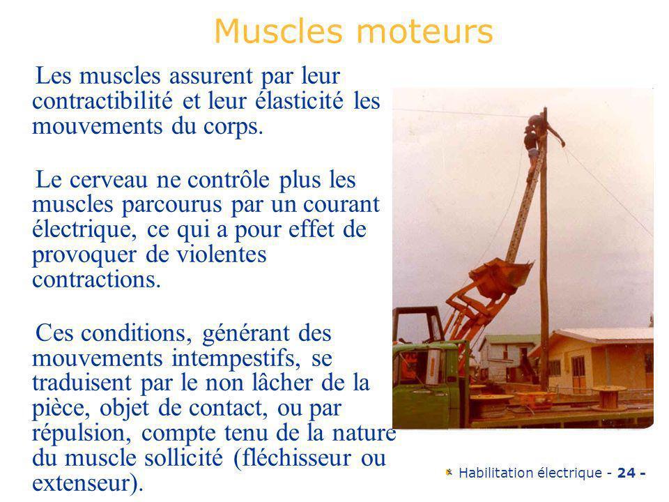 Habilitation électrique - 24 - Muscles moteurs Les muscles assurent par leur contractibilité et leur élasticité les mouvements du corps. Le cerveau ne
