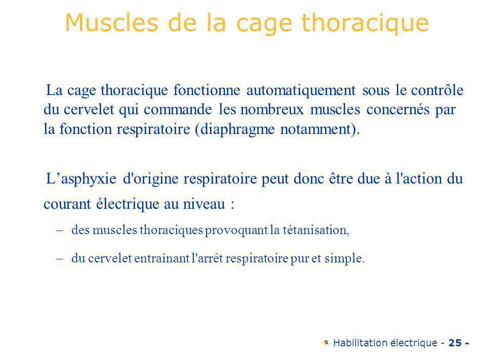 Habilitation électrique - 25 - Muscles de la cage thoracique La cage thoracique fonctionne automatiquement sous le contrôle du cervelet qui commande l