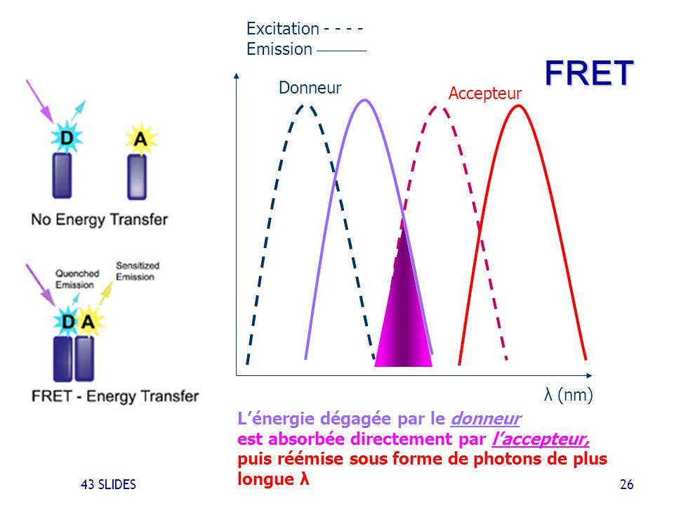 43 SLIDES 26 FRET Lénergie dégagée par le donneur est absorbée directement par laccepteur, puis réémise sous forme de photons de plus longue λ λ (nm)