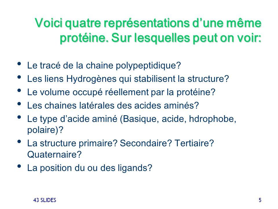 43 SLIDES 5 Voici quatre représentations dune même protéine. Sur lesquelles peut on voir: Le tracé de la chaine polypeptidique? Les liens Hydrogènes q
