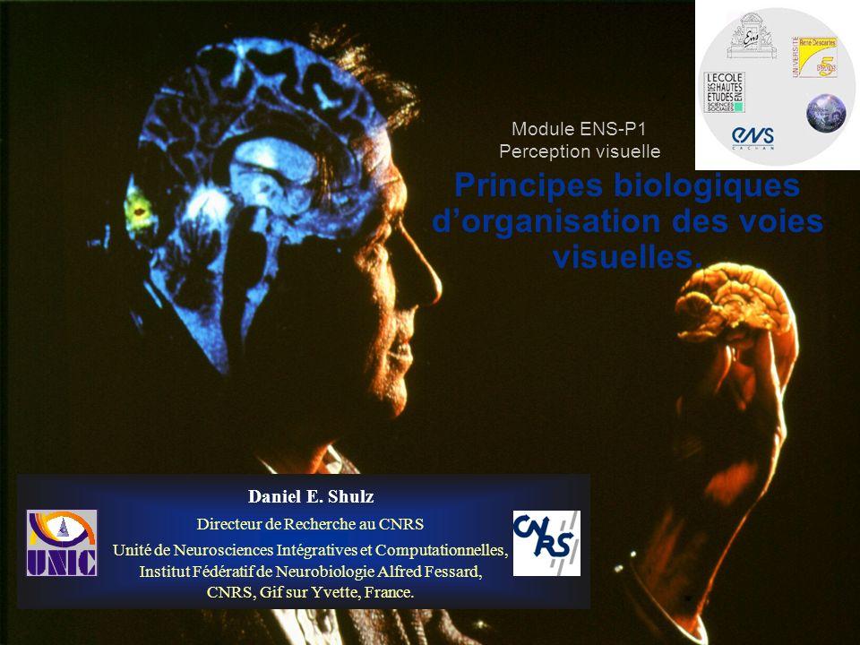 Principes biologiques dorganisation des voies visuelles. Daniel E. Shulz Directeur de Recherche au CNRS Unité de Neurosciences Intégratives et Computa