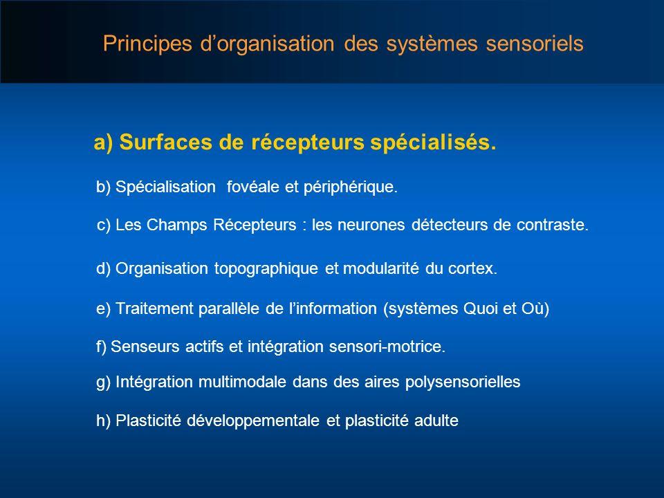 a) Surfaces de récepteurs spécialisés. b) Spécialisation fovéale et périphérique. h) Plasticité développementale et plasticité adulte d) Organisation