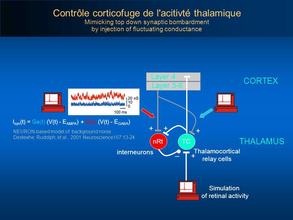 CORTEX THALAMUS Layer 4 Layer 5-6 + + + + _ TCnRt Contrôle corticofuge de l'acitivté thalamique Mimicking top down synaptic bombardment by injection o