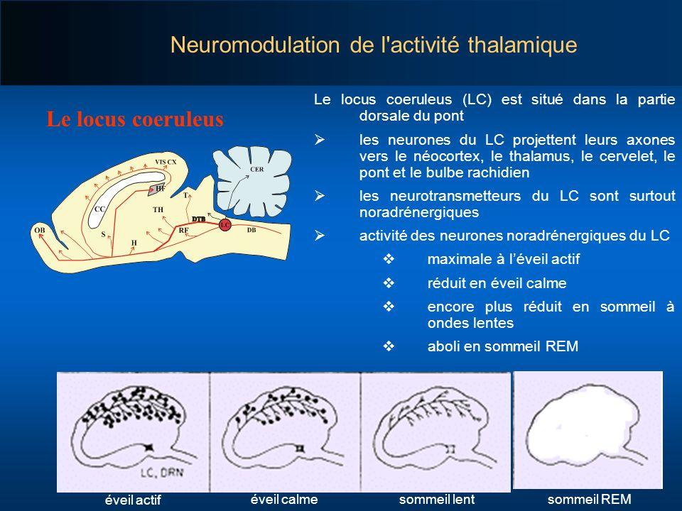 Le locus coeruleus (LC) est situé dans la partie dorsale du pont les neurones du LC projettent leurs axones vers le néocortex, le thalamus, le cervele