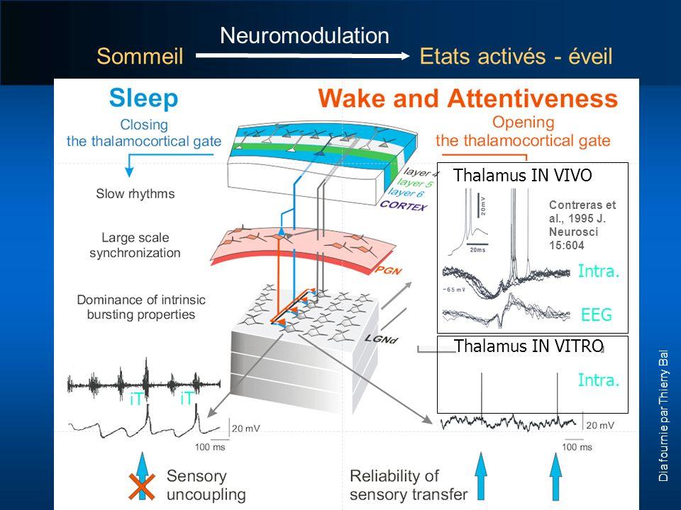Thalamus IN VIVO Thalamus IN VITRO Contreras et al., 1995 J. Neurosci 15:604 SommeilEtats activés - éveil iT Intra. EEG Intra. Neuromodulation Dia fou