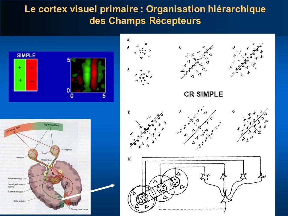 Le cortex visuel primaire : Organisation hiérarchique des Champs Récepteurs CR SIMPLE