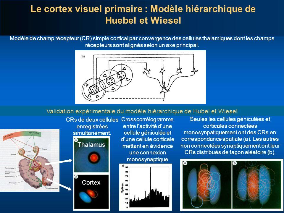 Le cortex visuel primaire : Modèle hiérarchique de Huebel et Wiesel Modèle de champ récepteur (CR) simple cortical par convergence des cellules thalam