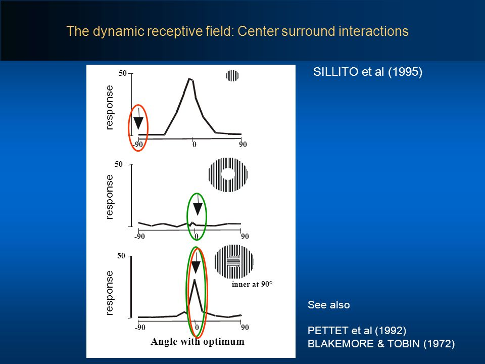 The dynamic receptive field: Center surround interactions SILLITO et al (1995) Angle with optimum 090-90 50 inner at 90° 090-90 50 090-90 50 See also