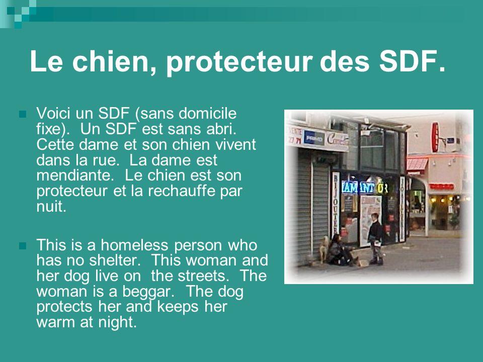 Le chien, protecteur des SDF. Voici un SDF (sans domicile fixe).