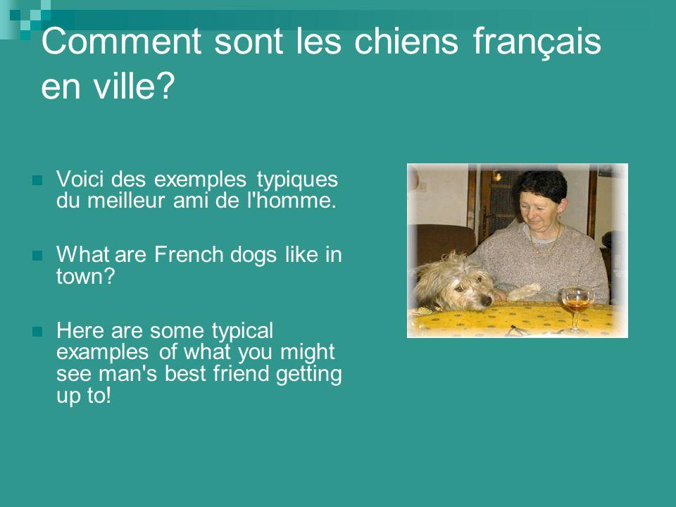 Comment sont les chiens français en ville. Voici des exemples typiques du meilleur ami de l homme.
