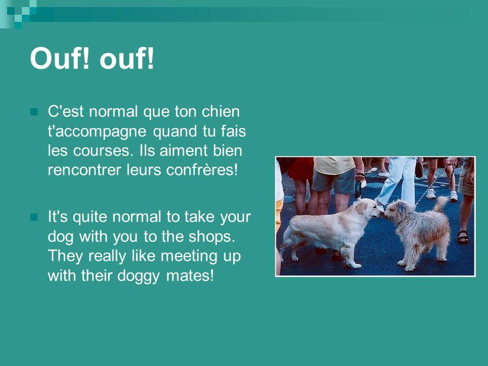 Ouf. ouf. C est normal que ton chien t accompagne quand tu fais les courses.