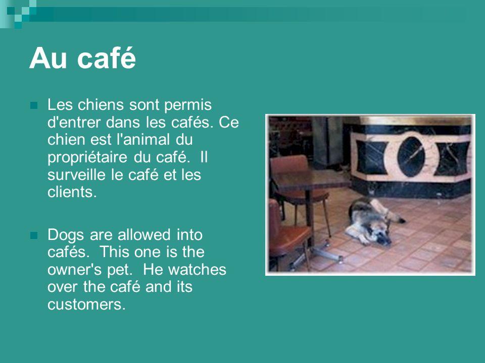 Au café Les chiens sont permis d entrer dans les cafés.